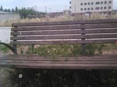 Parque ple de herbes i matolls