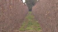 Bell-lloc d'Urgell investigarà com fomentar l'economia verda al territori