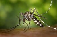 Campanya de tractament amb plaguicides