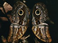 Exposició sobre biodiversitat  d'insectes a l'Amazones a la biblioteca